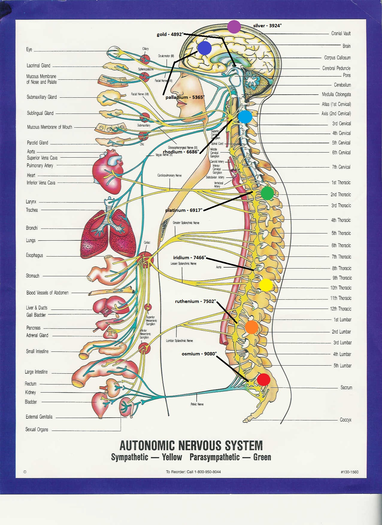 Name:  autonomic nervous system metals boiling point.jpg