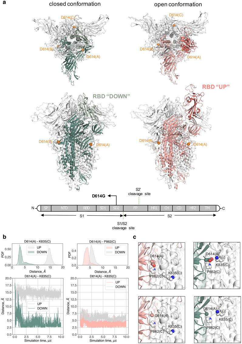 Name:  Variant Spike Protein D614.jpg Views: 113 Size:  261.6 KB